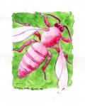 Pink Honeybee